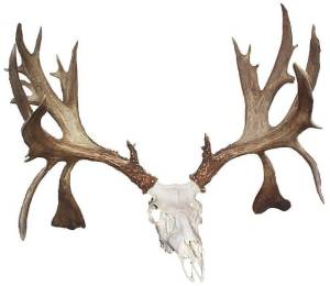 """meet whitetail singles Meet dale r larson dale larson,  trophy whitetail  dale's """"four x four"""" series of bucks are the only bucks of that magnitude taken by a single hunter in ."""